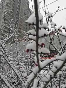 瑞雪兆丰年,大美新谊城